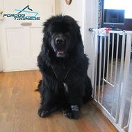 Newfoundland Harness: Easy Walk No Pull Dog Harness of Nylon
