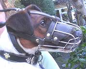 Gorgeous *Bodie wearing our Wire Basket Dog Muzzles Size Chart - M4light