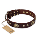 'Breath of Elegance' FDT Artisan Decorated with Plates Brown Leather Dog Collar
