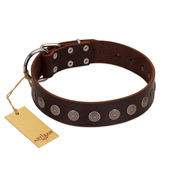 """Starry-Eyed"" Best Quality FDT Artisan Brown Designer Dog Collar with Small Plates"