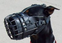 Buddy is fun to play with in new wire dog muzzle
