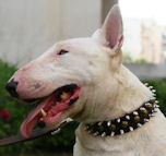 Crazy Discount Item - Bull Terrier 3 Rows Leather Spiked and Studded Dog Collar -S55