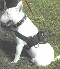 All Weather dog harness for tracking / pulling Designed to fit Bull Terrier- H6_1