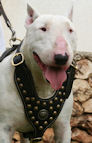 Royal Bull Terrier Harness - Exclusive Design Studded Leather Harness