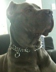 Drago finds excellent his new STAINLESS STEEL-Dog pinch collar made in Germany - 50004 55 (3.25mm)