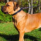 Multipurpose Leather Cane Corso Collar