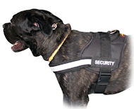 Nylon Dog Harness for Cane Corso - H6Plus