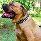 Wide 3 Rows Nickel Pyramids Leather Cane Corso Collar