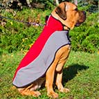 Winter Warming Nylon Cane Corso Coat for Walking
