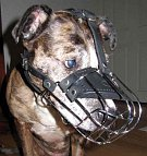Gorgeous Charlie wearing our Wire Basket Dog Muzzles - M4light