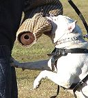 Protection Dog Training Bite Set - Bite Sleeve, Removable Cover and Agitation Stick