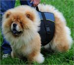 30% Discount - NEW 2018 All Season Extra Strong Nylon Vest Harness - H13-Outdoor-Chow-Chow