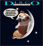 Disco wearing our exclusive Tracking / Pulling / Agitation Leather Dog Harness For English Bulldog H5