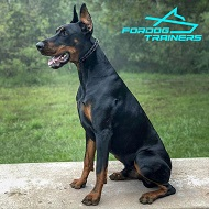 Effective Dog Training Doberman Pinch Collar - Herm Sprenger Black Stainless Steel Prong Collar