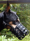 Nicely-looking Doberman in *Everyday Light Weight Super Ventilation muzzle