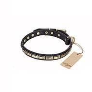 'Wealth Effulgence' FDT Artisan Leather Walking Dog Collar with Brass Plates - 1 inch (25 mm) wide