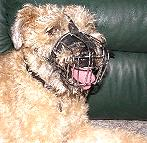 Wire Basket Dog Muzzles Size Chart - M4light_1