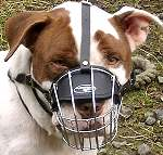 Yogi wearing our exclusive Wire Basket Dog Muzzles Size Chart -American Staffordshire Terrier muzzle ;M4