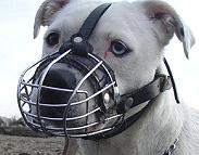 Mateo wearing our exclusive Wire Basket Dog Muzzles Size Chart - M4light