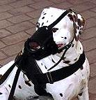Everyday Dalmatian Leather dog muzzle - product code M51_1
