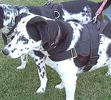 All Weather Nylon dog harness for tracking / walking Designed to fit Dalmatian - H6_1