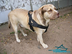 *Duke Presents Multifunctional Nylon Dog Harness for Daily Use