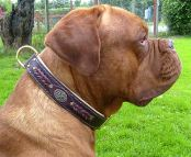 Duncan wearing our exclusive Hand Made Leather Dog Collar - Fashion Exclusive Design - code C43