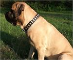 Wide Leather Dog Collar - Fashion Exclusive Design - Special33plates