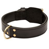 dog collar training