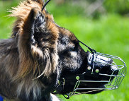 Kastle is delightful in Basket Dog Muzzles (All Sizes)