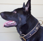 Alois got cool gift the Royal Nappa Padded Hand Made Leather Dog Collar - Fashion Exclusive Design - code C43