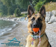 *Brynn Playing with Durable Rubber German Shepherd Ball on Rope