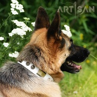 *Brynn Looks like a Super Star in Unique Design White Leather German Shepherd Collar