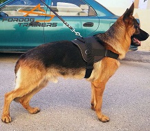 *Cooper Walking in Nylon German Shepherd Harness for Pulling and Tracking