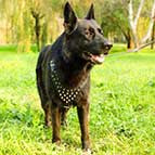 German Shepherd Spiked Dog Harness - Deluxe Best Dog Harness