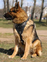 Agitation/Protection Leather Dog Harness-german shepherd