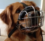 Adorable Miller in Basket Dog Muzzle