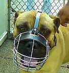 Gorgeous *HERCULES wearing our Wire Basket Dog Muzzles Size Chart - M4light