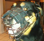Handsome boy wears NEW Revolution Design Dog Muzzle