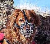Hunter wearing our exclusive Basket Wire Dog Muzzle Light - M4light