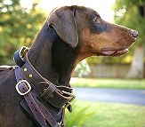 2 ply wide leather dog collar with handle-C33_3