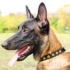 Gorgeous Leather Belgian Malinois Collar With Doted Circles
