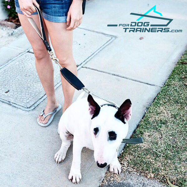 Bull Terrier Wearing Leather Short Dog Lead Pull Tab