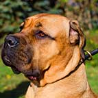 Round Leather Cane Corso Choke Collar for Regular Training