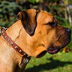 Studded Hand-Made Leather Cane Corso Collar
