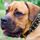 Superior Designed Leather Cane Corso Collar with Brass Spikes