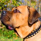 "Exclusively Designed Fashion Leather Cane Corso Collar with Brass Studs - ""Caterpillar"""