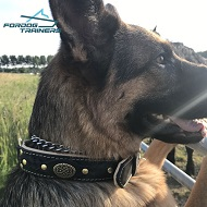 Braided Design German Shepherd Padded Leather Dog Collar