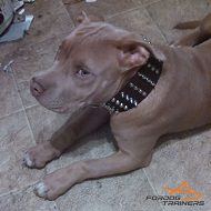 *Nyx in 2 Inch Wide Leather Dog Collar with Spikes and Studs