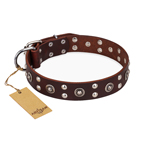 """Pirate Treasure"" FDT Artisan Exciting Brown Leather Dog Collar with Studs"